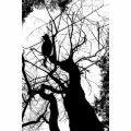 KITTY TREE SILHOUETTE B&W